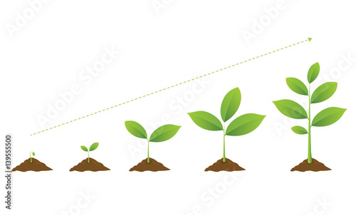 Infographic Of Planting Tree Seedling Gardening Plant Seeds Sprout In Ground Sprouts
