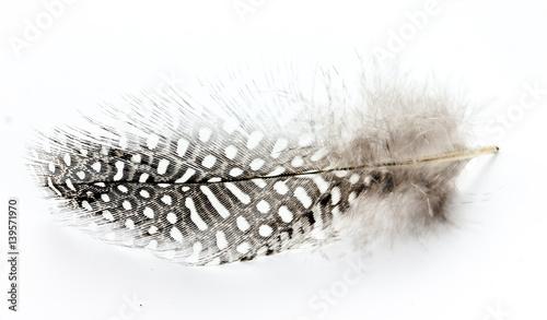 Cętkowany piórko ptaka na białym tle