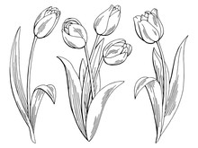 Tulip Flower Graphic Black Whi...