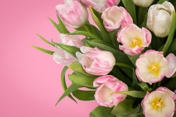 Obraz Tender pink tulips with copy space