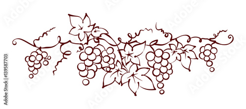 Canvastavla  Design elements -- vine / Graphic vector illustration, grapes drawing sketch