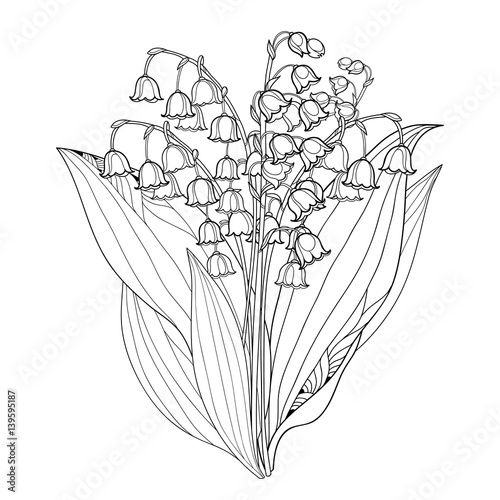 Ornate Floral Element For Spring Design Or Coloring Book Bunch Of May Lily Flower In Contour