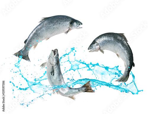 Salmon fish jumping out of water Fototapeta