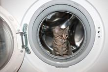 Little Kitten In The Washing M...
