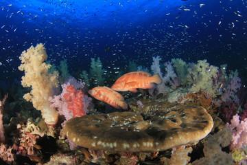 Fototapeta na wymiar Underwater coral reef and fish in ocean