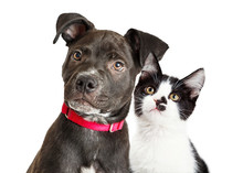 Puppy And Kitten Closeup Over White