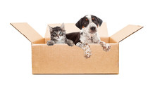 Puppy And Kitten In Cardboard ...
