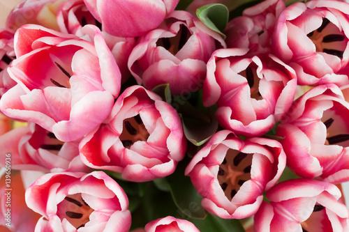 bukiet-rozowo-bialych-tulipanow-widoczny-z-gory