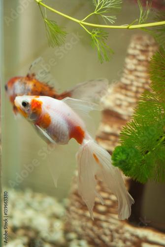 Photo The fish in the aquarium,