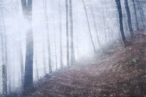 Artistic windy, snowy and foggy seasonal forest tree landscape.