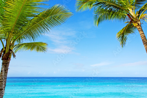 Foto Rollo Basic - Beautiful palm trees and caribbean sea.
