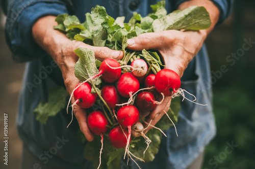 Printed kitchen splashbacks Vegetables Radishes on hands