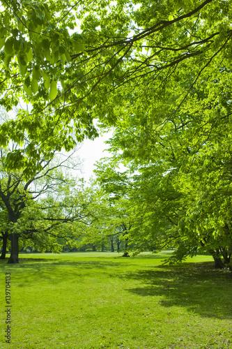 Spoed Fotobehang Begraafplaats 新緑の公園