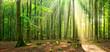 Unberührter naturnaher sonniger Laubwald, Sonnenstrahlen dringen durch Nebel