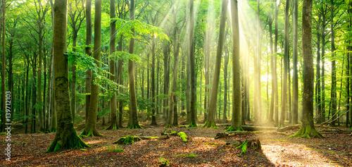 Fotobehang Bossen Unberührter naturnaher sonniger Laubwald, Sonnenstrahlen dringen durch Nebel