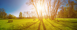Fototapeta Na ścianę - Panorama of a green park with trees in the early morning. Spring sunrise
