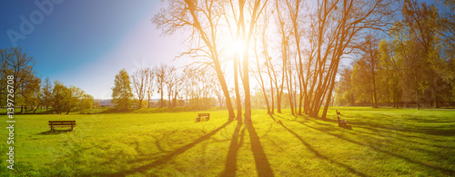 Cadres-photo bureau Miel Panorama of a green park with trees in the early morning. Spring sunrise