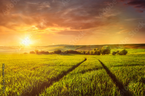 Deurstickers Platteland Sunset in field