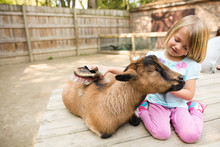 Girl Grooming Goat With Brush ...