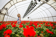 Girl In Greenhouse Of Geraniums