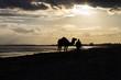 погонщик и верблюд в сумерках на берегу моря