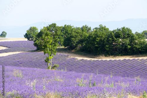 Montage in der Fensternische Lavendel Lavendelfelder