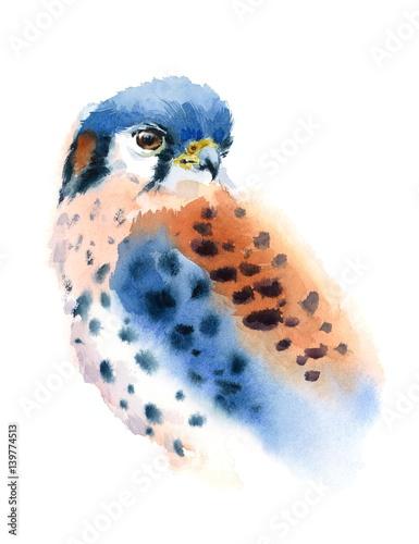 pustulka-amerykanska-na-bialym-tle-drapiezny-ptak-akwarela