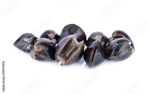 fresh Corbicula shell on white background