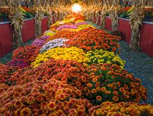 Colorful Harvest Floral