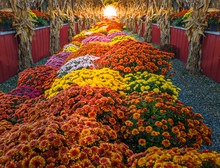 Colorful Harvest Floral, Autumn Seasonal Blossoms