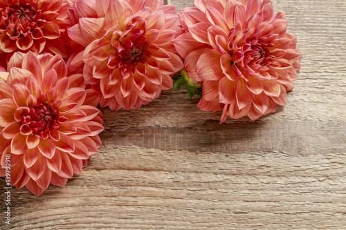 Poster de jardin Dahlia Orange dahlia flowers on wood