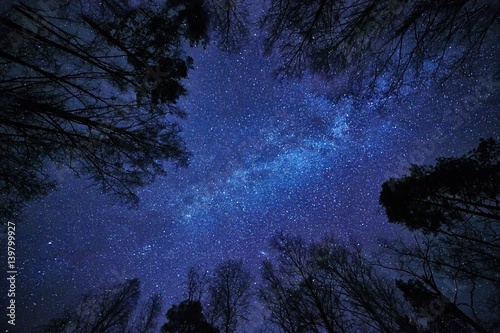 Night sky with the Milky Way over the forest and trees surrounding the scene.