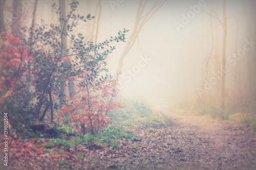 Printed kitchen splashbacks Beige English woodland on a foggy misty morning