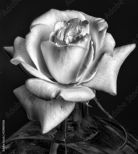 Fototapety, obrazy: vintage monochrome rose blossom in a vase, delicate still life fine art floral macro flower portrait of a single isolated bloom in black and white with filigree fine texture on black background