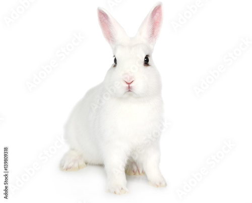 White Bunny isolated on white