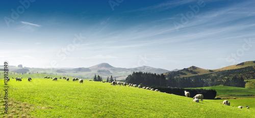 Fotografia beautiful pasture with animals near hill