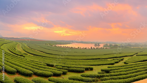 Beautiful landscape of green tea farmland in the morning with dramatic sky Canvas Print