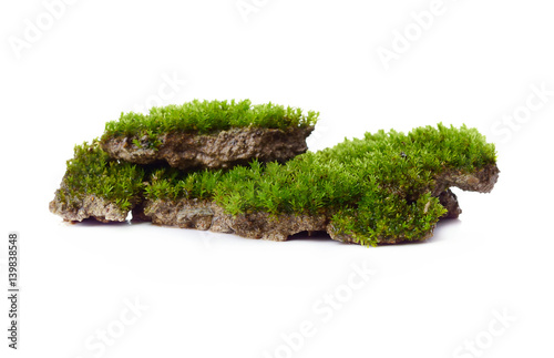 Fotografie, Obraz  Green moss isolated on white bakground