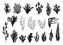 Algae And Corals Set Vector