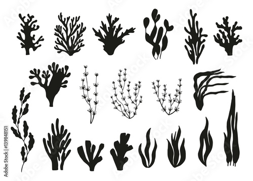 Photo algae and corals set vector