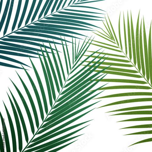 hawajskie-liscie-palmy