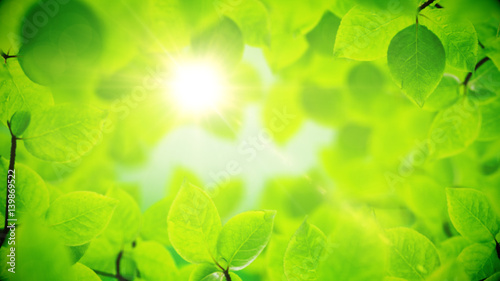 Fotografía  Spring background, natural frame of beautiful green leaves