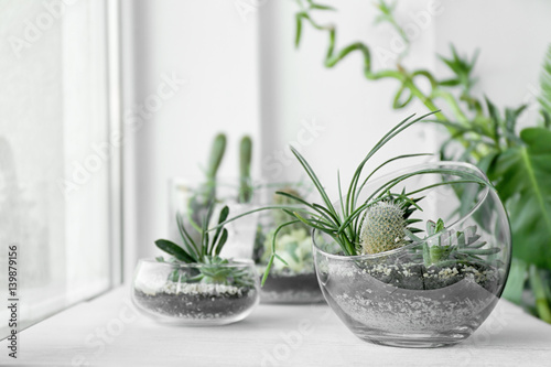 Poster Vegetal Mini succulent garden in glass terrarium on windowsill