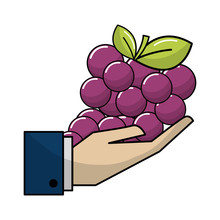 Organic Grape Fruit In The Hand Icon
