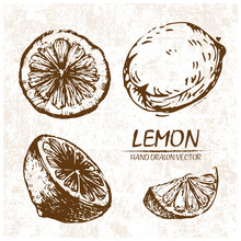 Digital Vector Detailed Lemon Hand Drawn Retro Illustration Collection Set. Thin Artistic Linear Pencil Outline. Vintage Ink Flat Style, Engraved Simple Doodle Sketches. Isolated Objects