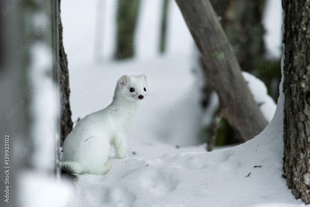 Fotografie, Obraz animal