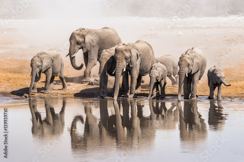 Family of African elephants drinking at a waterhole in Etosha national park Canvas Print
