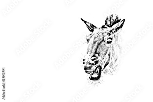Fotografie, Obraz  Photo of a horse head