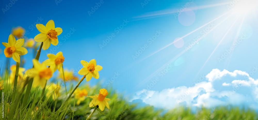 Fototapety, obrazy: Spring flower