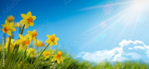 Deurstickers Lente Spring flower